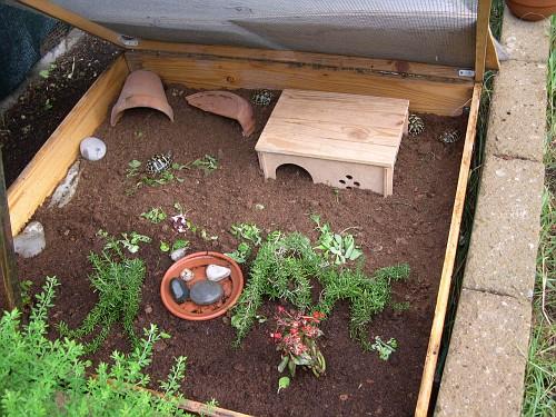 Interno recinto antitopo tartarughe simona livorno for Casette per tartarughe
