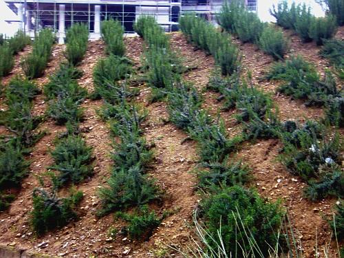 Idee per giardini  Giardino e aiuole con lavanda e piante aromatiche