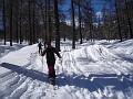 Sciatori nel bosco